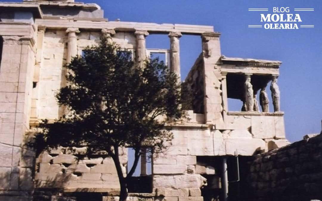 Simbología del olivo, un árbol mítico
