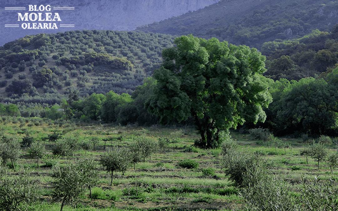 Molea Olearia junto al Día Mundial del Medio Ambiente